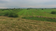 Rural Field With Fresh Rolls Of Haystacks In spring Day. Aerial Stock Footage