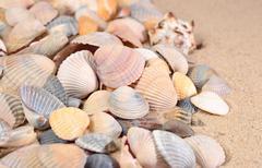 Seashells close-up on a beach sand - stock photo