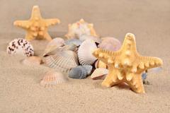 Starfishs and seashells close-up in a beach sand - stock photo