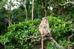 Monkey waiting for and looking for chance to stolen food in an island of anda - stock photo