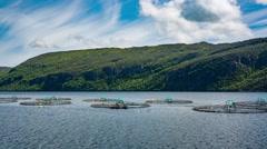 Farm salmon fishing Stock Footage