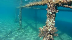 Underwater, pier, Red sea, Marsa Alam, Egypt Stock Footage
