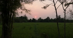 View of sunset at rice paddy field (timelapse) Stock Footage