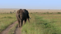 Elephant slow moving out of camera close up safari in savanna. Africa. Kenya. - stock footage