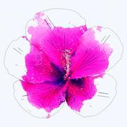 Watercolor pink hibiscus - stock illustration