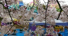 4k park playground against sakura background,cherry blossoms in china. Stock Footage