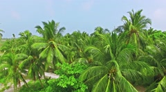 Flying over the coconut palms on the tropical island. Stock Footage
