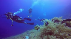 Underwater videographer, filming a couple of bannerfish. - stock footage