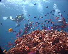 Ocean scenery 5 divers hanging on a ascent line, on shallow coral reef, UP6096 Stock Footage