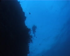Distant scuba diver swimming on wall in Fiji Islands, UP6189 Stock Footage
