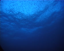 Ocean scenery With other species, in bluewater, at dusk, UP6262 - stock footage