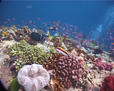 Ocean scenery lots of different fish, on beautiful healthy and diverse reef, Stock Footage