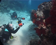 Group of scuba divers taking images on sand and reef with Variable soft coral in Stock Footage