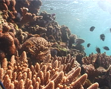 Freedivers on very shallow reef and surface in Fiji Islands, UP6721 Stock Footage