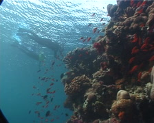 Freedivers swimming on very shallow reef and surface in Fiji Islands, UP6724 Stock Footage