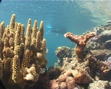 Ocean scenery snorkeller, on very shallow reef and surface, UP6727 Stock Footage