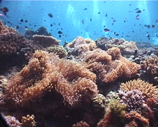 Ocean scenery hard coral garden, on shallow coral reef, UP6789 Stock Footage