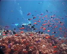 Expert diver with perfect buoyancy swimming on shallow coral reef with - stock footage