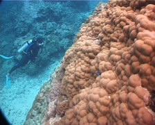 Lone diver on coral bommie with Unidentified boulder coral in Fiji Islands, Stock Footage