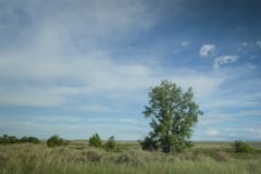 Timelapse trees and shrubs in afternoon on prairie Stock Footage