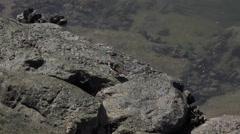 4k Ruddy Turnstone bird at coastal pier in Portugal Stock Footage