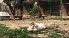 Dog playing in a kennel in the summer Stock Footage
