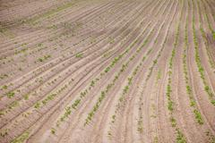 Country farm landscape - plowed field and trees. Agriculture beginning of spring - stock photo