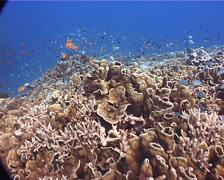 Ocean scenery amazing enormous monospecific colony of hard coral covered in Stock Footage