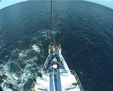 Humpback whale, Megaptera novaeangliae, UP8341 Stock Footage