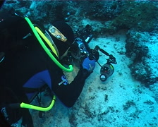 Housed SLR photographer taking images on sand and reef with Blue ribbon eel in Stock Footage
