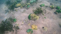 Rocky-sandy bottom overgrown with algae, Siberia, the Russian Federation, Stock Footage