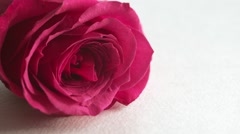 Valentine's Day rose petals falling. White background. Stock Footage