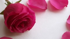 Valentine's Day rose petals falling. White background. - stock footage