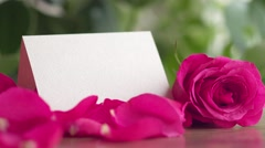 Valentine's Day rose petals falling - stock footage