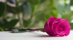 Man's hand puts a greeting card with a rose on the table. - stock footage