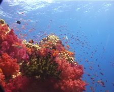 Ocean scenery on shallow coral reef, UP9860 Stock Footage