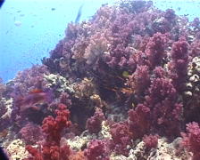 Ocean scenery on shallow coral reef, UP9873 Stock Footage