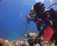 Buddy team of scuba divers ascending-breathing on shallow coral reef with Banded Stock Footage