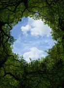 Low angle view of sky and tree canopy Stock Photos