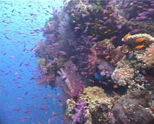 Ocean scenery beautiful, colourful reef, on shallow wall, UP10526 Stock Footage