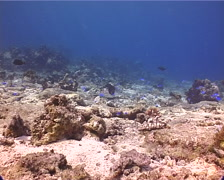 Ocean scenery on shallow reef flat bedrock and rubble, UP10898 - stock footage