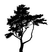Tree Silhouette Isolated on White Backgorund. Vecrtor Ill - stock illustration