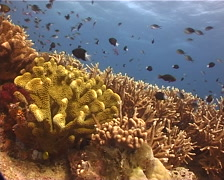Ocean scenery on shallow coral reef, UP11086 Stock Footage