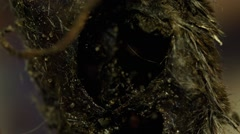 maggots inside body and a fly - stock footage