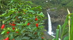 Manto de la Novia Waterfall and Flowers in the Forground Stock Footage