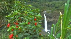 Waterfall and Flowers in the Foreground  Stock Footage