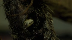 maggots inside the body - stock footage
