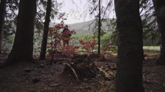 Hiker in the forest path Stock Footage
