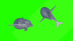 Two dolphins swimmimg on a green screen Stock Footage