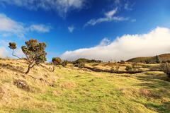 Azores landscape – grass, trees and blue sky - stock photo